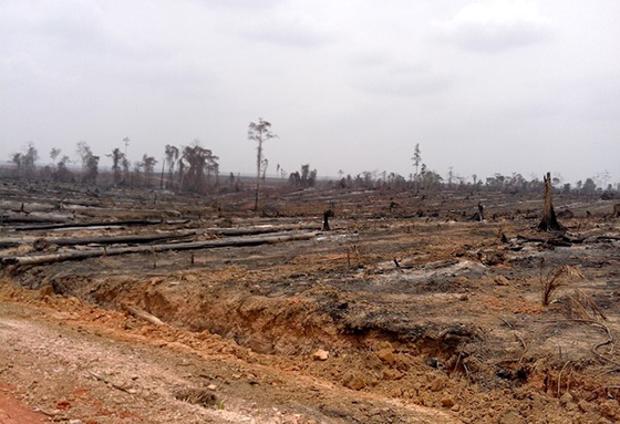 October fires hit traditional indigenous lands in Merauke district in Indonesia's Papua province. Image: Pusaka