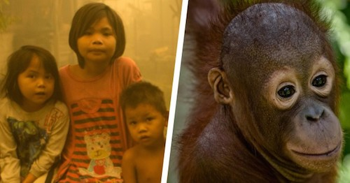Lives and wildlife at risk in Indonesian forest fires. Image: Greenpeace