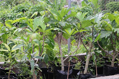apr Pacific crops 260416 500wide