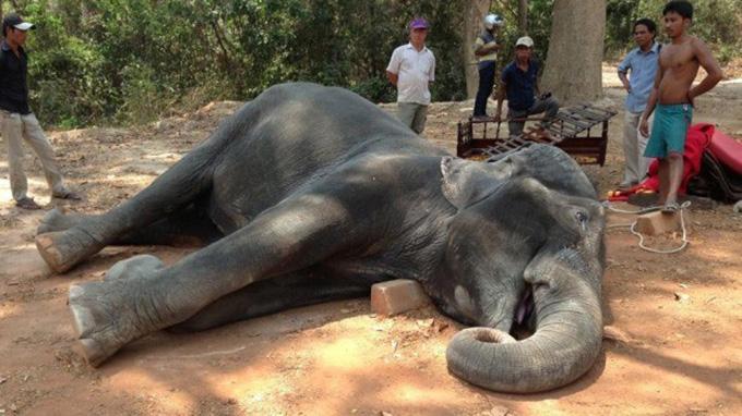 P3-Animal Tourism-DPink-Sambo horiz 680wide