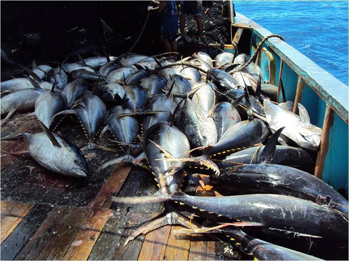 Vanuatu agrees to pay vt18 million fine to avoid fisheries for Fishing in vanuatu