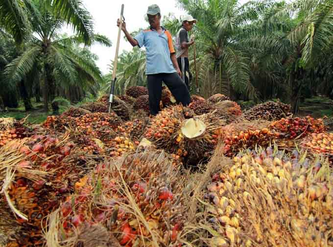 Indonesian oil palm plantation workers outdoor fuck - 3 1