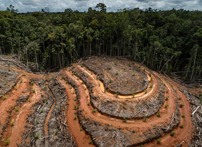 greenpeace blasts palm oil industry deforestation in west papua