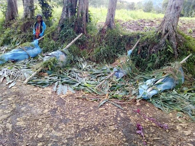 PNG massacre
