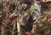 PNG troops