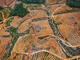 Deforestation in Central Kalimantan